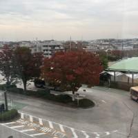 十日市場駅前の木